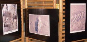 A kiállítás képei...